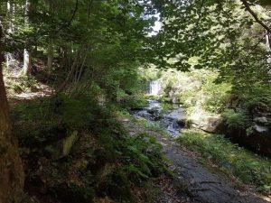 מסלול ביער
